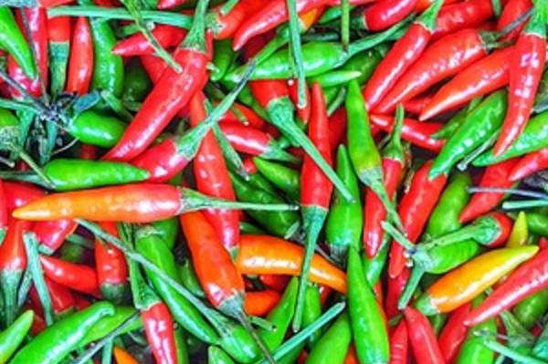 每天食用辣椒可降低死亡率!在家用这个东西就能种植!