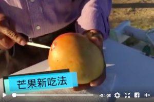 芒果新吃法,99%的人都没看过!(视频)