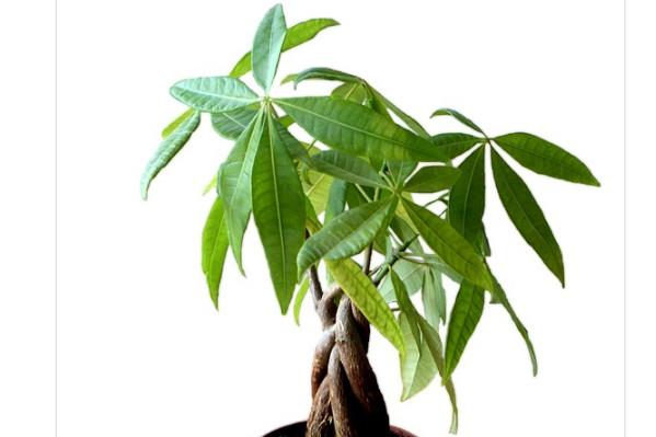 想要旺財運嗎?快養這幾種植物!