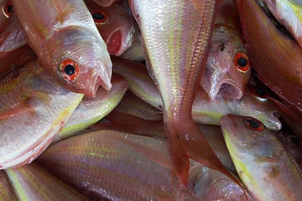 怎样挑选新鲜的鱼 鳃红未必安全