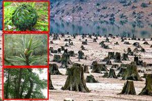 大陆40种植物灭绝  生态环境被人为毁掉