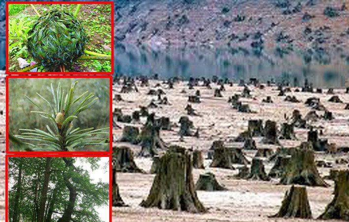 大陸40種植物滅絕  生態環境被人為毀掉