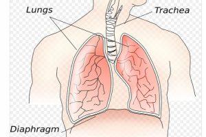 英國諾丁漢研究:每天吃1碗菠菜 可降低至少一半的肺癌罹患率