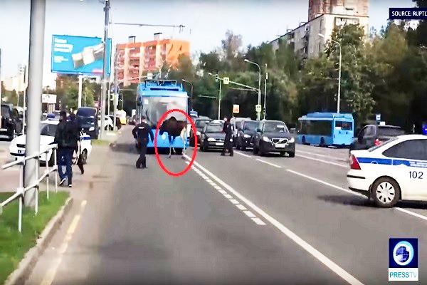 麋鹿逗趣逛大街 伸头进车内看究竟 莫斯科警戒慎围赶
