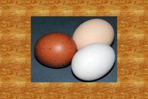 鸡蛋、鸭蛋、鹅蛋、鹌鹑蛋,什么年纪的人适合吃哪种蛋