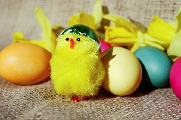 哪種雞蛋更有營養 放養母雞和飼養母雞有什麼不同