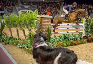 多伦多皇家农业冬季博览会:北美第一室内马术赛事