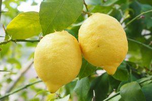 柠檬不只泡水喝 还有很多你可能不知道的用法