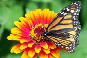 換季花粉症 靠飲食改善 香草抗過敏