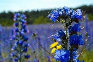 科學試驗揭秘:植物能看穿人類謊言