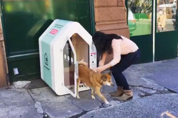 """带爱犬出门无处放? 纽约出现""""托狗屋""""服务"""