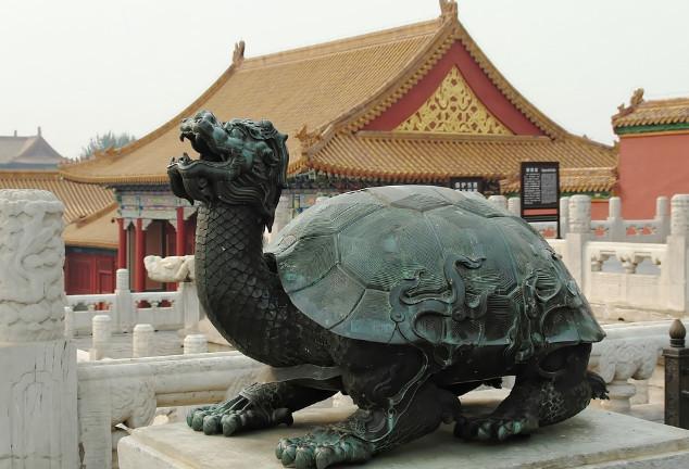 活了一万年的神龟 因怕光两千年才伸一次头
