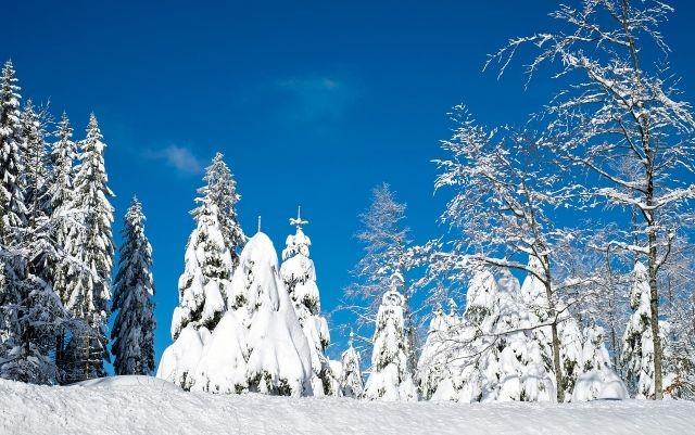 冬至大如年 陽生春又來