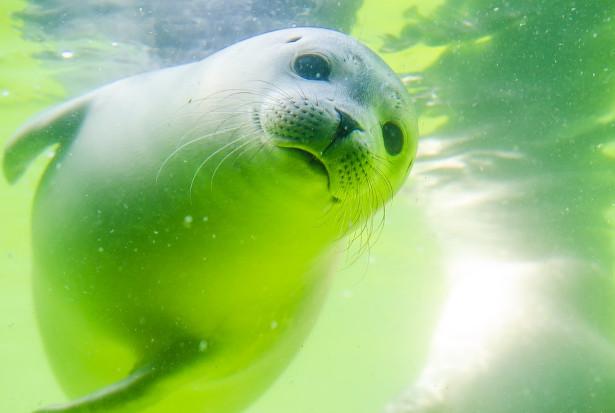 他好心将偶遇的小海豹送回海里 没想到惹来麻烦(视频)