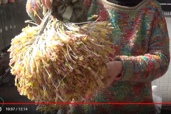 吃不完的豆芽菜 台灣大媽超會種(視頻)