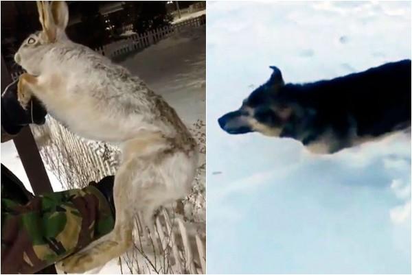 心痛!哈萨克斯坦低温-56℃ 狗狗野兔冻成标本