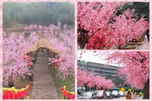 重慶數百畝桃花林驚艷路人 原來全是假花