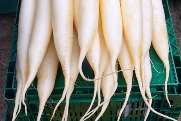 平民人蔘 白蘿蔔的挑選方法(視頻)