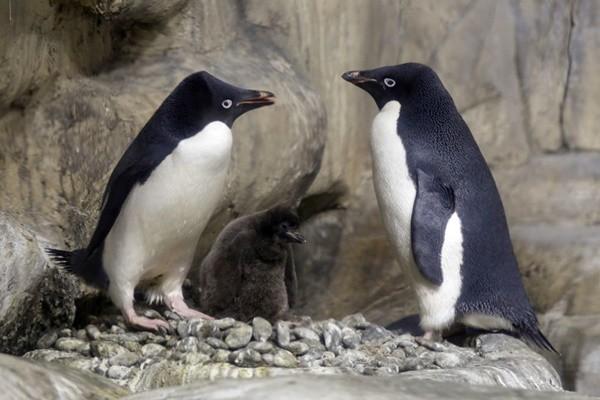 南極太空照 危險群島驚現150萬隻企鵝