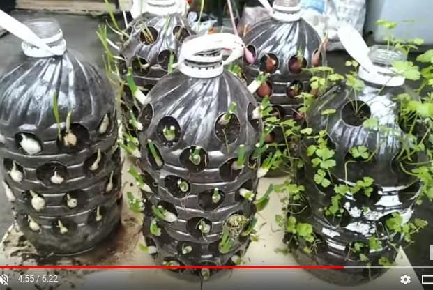 吃不完的菜大集合 台灣大媽種菜收穫滿滿(視頻)