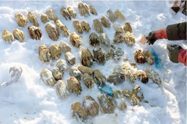 毛骨悚然 中俄邊境驚現54隻人類斷掌