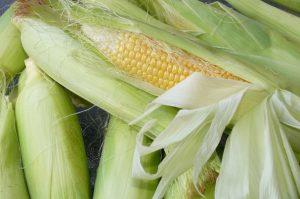 想吃新鲜玉米自己种 台湾大妈教种糯玉米(视频)