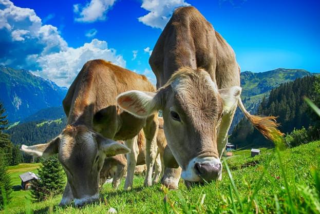 因果報應實錄:轉生為牛始信報應
