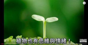 """科学实验证明: 植物具有""""遥感超能力""""?(视频)"""