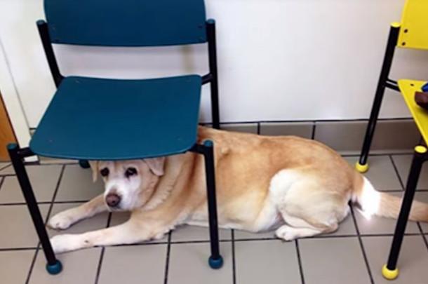 原以为要去公园结果去看兽医 28个狗狗的绝望表情(视频)