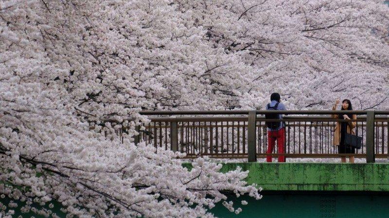 日本明年起开征出境税 每人1000日圆