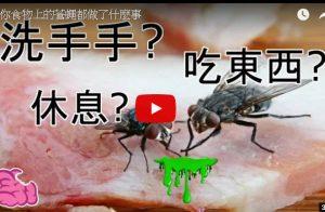 停在你食物上的蒼蠅到底做了什麼 食物還能吃嗎(視頻)