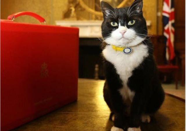 英外交部公佈捕鼠官「戰績」 大勝首相懶貓