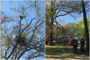 爱心男子爬树救猫被卡树上下不来