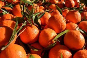 橘子的妙用 降五成糖尿病(視頻)