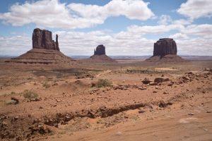 亞利桑那州旱象緊急 近200匹野馬集體死亡