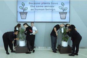 言语霸凌影响植物生长? IKEA实验结果惊人