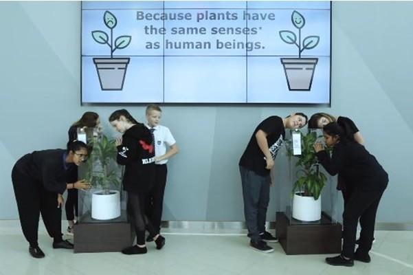 言語霸凌影響植物生長? IKEA實驗結果驚人