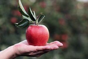 兩位母親分蘋果,卻造就了兩個孩子天壤之別的人生⋯⋯令人深思!