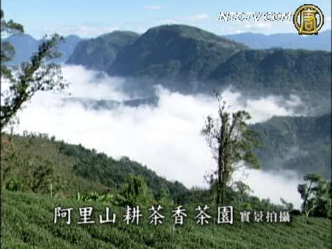 阿里山耕茶香  極品高山茶(廣告)