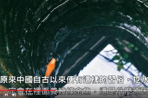 為何古人會在井中養金魚 原來有一個很重要的原因(視頻)
