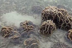 罕見潮汐!水位下降1米 海底生物全曝露(視頻)