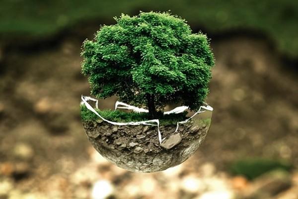 全球悲劇 科學家:完整森林年損面積超過奧地利