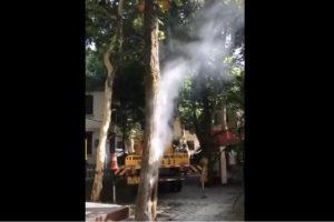 热爆了 武汉路边大树树根自燃冒烟(视频)