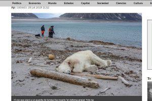 幸或不幸 北极熊攻击邮轮警卫遭击毙