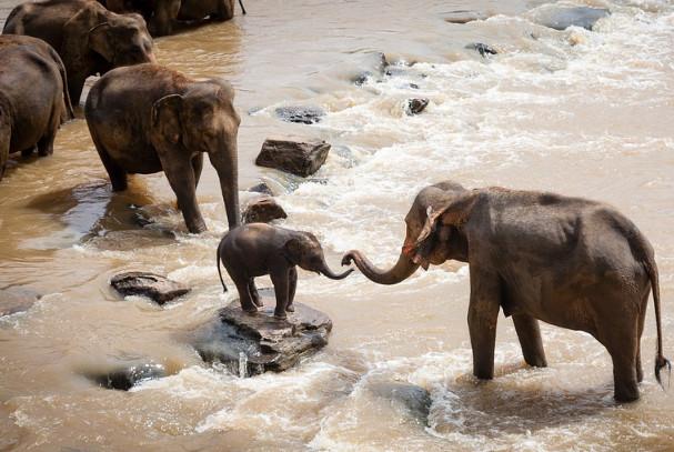 清代动物奇闻 有孝心的小象