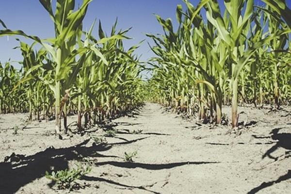 热浪致农作物枯萎 红十字会:朝鲜恐爆粮食危机