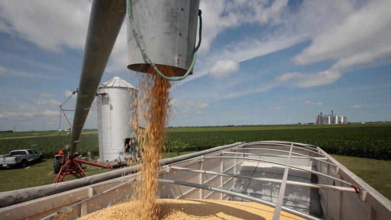 贸战恶果浮现 陆大豆库存将耗尽 猪肉价格或飞涨