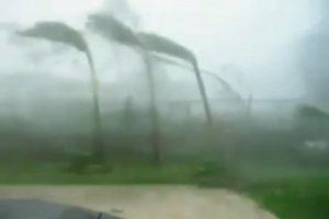 """见识强台山竹威力 影片:椰子树被吹到""""低头""""不起"""