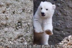 北极熊宝宝刚学会走路 母子情深好窝心(视频)