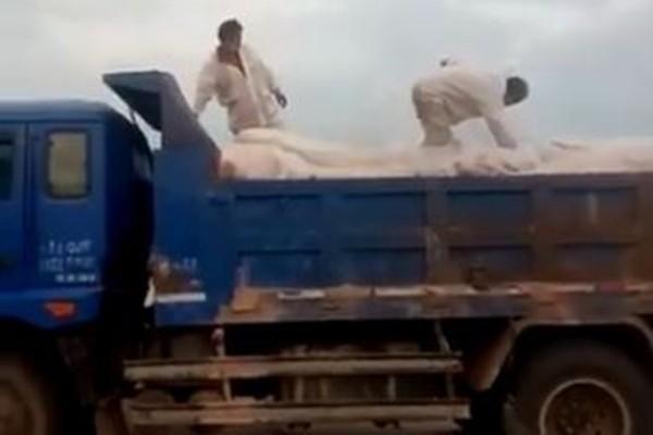 网传天津18吨瘟猪肉贩卖江西